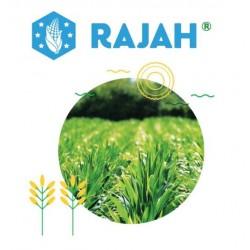 RAJAH BIDON 5 L