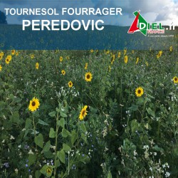 TOURNESOL FOURRAGER PEREDOVIC 10 KG